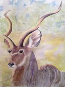 Watercolor of kudu by Dahlia